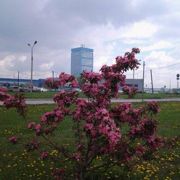 22 мая  2015 года – открылся новый сайт Паркового комплекса